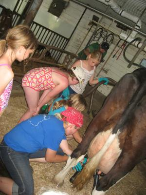 Girl Scouts milking cows